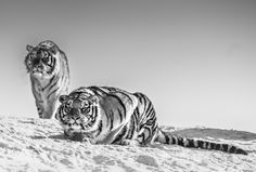 GOODNIGHT MR BOND | David Yarrow |