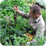 The 5 Key Principles of Permaculture, the Easiest Organic Gardening Method : Vegan Recipes Blog
