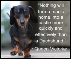 Or a dachshund puppy, left unattended, turn a castle into a home.