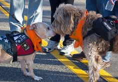 Veterans walk with canines to honor service dogs who saved their lives.
