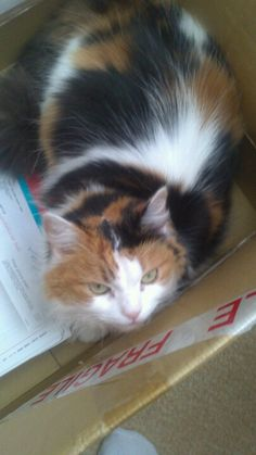 Shmoo in yet another box.