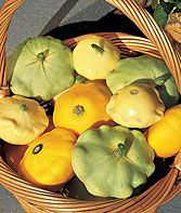 Summer Scallop Hybrid Mix Summer Squash Seeds and Plants, Vegetable Gardening at Burpee.com