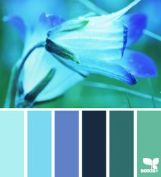 ... teal en petrol tinten more blue color floral blue color palette colour