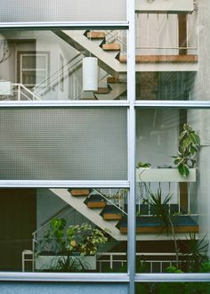 Modern home with stairs seen through glass walls - Lots of indoor potted plants