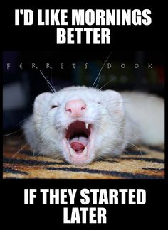 I love ferrets and hate mornings, this photo pretty much sums that up :)