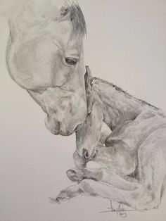 Mare and foal drawing by Tony O'Connor whitetreestudio.ie Thanks to Craig Payne Photography for reference pic