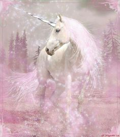 Unicorns always awaiting for the fairies they serve!