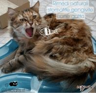 Rimedi naturali stomatite gatto | Elicats Holistic Pets