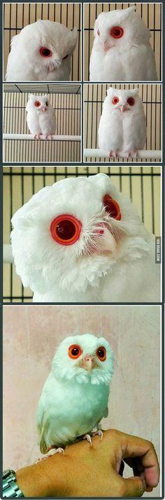 dear little owl