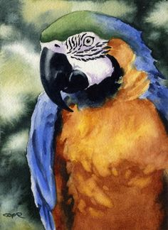 MACAW BLUE And GOLD Art Print Signed by Artist D J Rogers