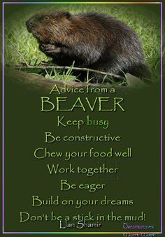 Today Quotes, Advice Quotes, Life Advice, Good Advice, Spirit Animal Totem, Animal Spirit Guides, Owl Quotes, Tree Quotes, Funny Quotes