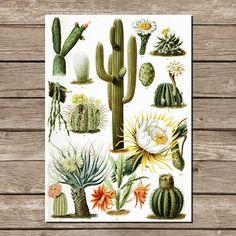 Botaniczny plakat a4 wydruk grafika PUSTYNIA - LawendowyBazar - Wydruki cyfrowe