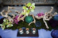 #Orchids #succulents and #driftwood