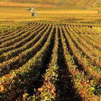 La justice poursuit un viticulteur bio qui dit non aux pesticides