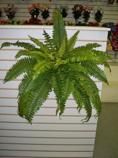 3xartificial leaves silk plant silver boston fern 55cm 14 leaves wholesale artificial greenery and flowers inc silk flowers artificial plants mightylinksfo