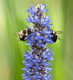 Bees pollinating at Lewis Ginter Botanical Garden