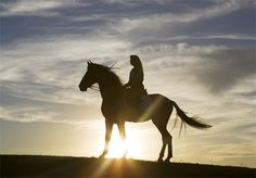 Equine Photography by Daniel Fernandez Cowgirl And Horse, Horse Love, Horse Riding, Horse Photos, Horse Pictures, Pretty Horses, Beautiful Horses, Beautiful Sky, Horse Silhouette