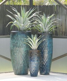 Silver bromeliads are planted in these beautiful blue pots. See over 1000 images…