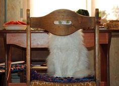 Ninja Cat Training Day Two