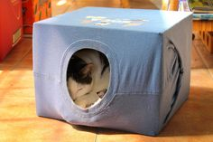 DIY cat house - just use an old t-shirt and a box