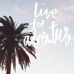 live for adventure palm tree // anelise salvo