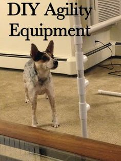 DIY Agility Equipment