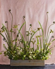 Soaring fiddlehead ferns, chartreuse sword ferns, and nodding Sicilian honey garlic offer height to this verdant arrangement, inspired by a wander through woodlands. Chadwick likes placing a pair of her screens on either side of an entrance.
