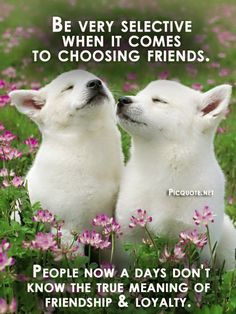 short quotes about loving dogs and cats - Google Search