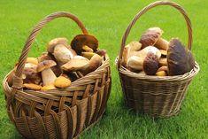 Portobello, Kitchen Hacks, Stuffed Mushrooms, Vegetables, Cooking, Health, Blog, Autumn, Mushrooms