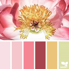 Design Seeds + Color Atlas by Archroma® Colour Pallette, Colour Schemes, Color Combos, Color Patterns, Inspiration Wand, Color Inspiration, World Of Color, Color Of Life, Design Seeds