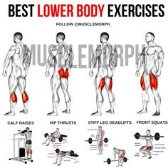 BEST LOWER BODY EXERCISES . The lower body is made up of four main muscle groups: Quadriceps, Hamstrings, Glutes, and Calves. Here are the best exercises for each muscle based on muscle activation levels, overloading ability, accessibility, and overall muscle stress the exercise places on the muscle.