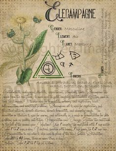 Magic plant knowledge has a long history and has a place in the modern witches Book of Shadows. Book of Shadows pages. Magic Herbs, Plant Magic, Herbal Magic, Healing Herbs, Medicinal Herbs, Magick Spells, Hedge Witchcraft, Wiccan, Witch Herbs