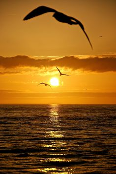 Very beautiful sunset♥ Amazing Sunsets, Amazing Nature, Cool Pictures, Beautiful Pictures, Beautiful Sunrise, Beautiful Landscapes, Beautiful World, Silhouettes, Nature Photography