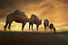 Hypnotic desert II