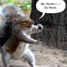 squirrel dance