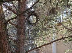 andy golsdsworthy tree - Google Search