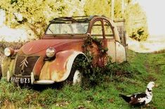 Abandoned Cars, Abandoned Places, Vintage Cars, Antique Cars, Citroen Traction, 2cv6, Rusty Cars, Car Painting, My Ride