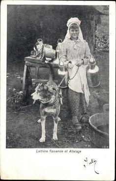 Ak Belgien, Laitière flamande et Attelage, Milchmädchen, Zughund - 985347