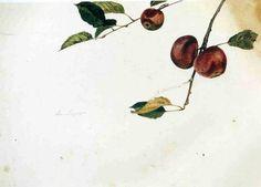 Andrew Wyeth...