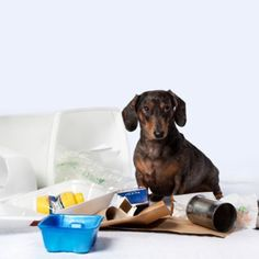 Our pets love garbage and will often become curious about it if it is left out or open. We recommend always keeping a tight lid on garbage cans, especially during parties and events where your pet might be unsupervised. Help keep your pet safe!