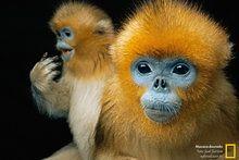 Fotografia - National Geographic Brasil-rogerio gualberto da silva