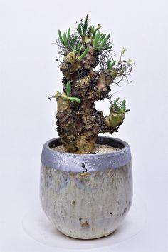 万物想 Succulent Bonsai, Succulents, Cacti, Sculpting, Planter Pots, Plants, Cactus Plants, Sculpture, Succulent Plants