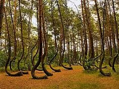 Nature's Eye: Crooked Forest in Poland through Process of Soil Creep