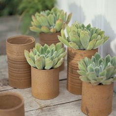 #succulents in tin cans