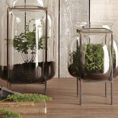 .plants inside glass vase