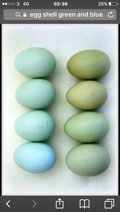 Dyed easter eggs in shades of blue and green. Tiffany Blue, Colour Schemes, Color Combos, Aqua, Teal, Light Turquoise, Cobalt Blue, Duck Egg Blue, Duck Eggs