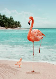 Wannabe Flamingo Mini Art Print by Jonas Loose - Without Stand - x Canvas Art Prints, Framed Art Prints, Poster Prints, Photo Wall Collage, Picture Wall, Flamingo Shower Curtain, Flamingo Bathroom, Flamingo Art, Pink Flamingo Wallpaper