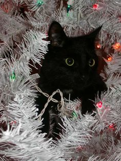 What? Never seen a cat ornament?