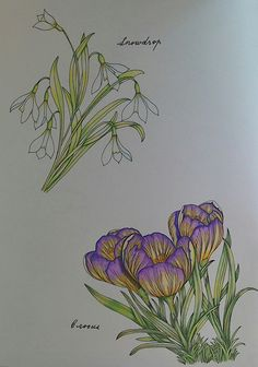 From The Flower Year by Leila Duly. Coloured with Prismacolor premier