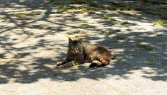 キジトラ猫(913)猫写真-横浜 #猫写真